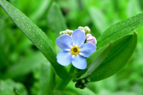 forgetmenot-web