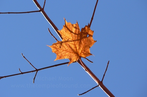 last-leaf-web
