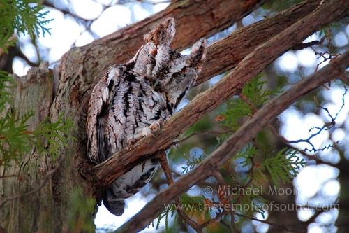 owl_0138web