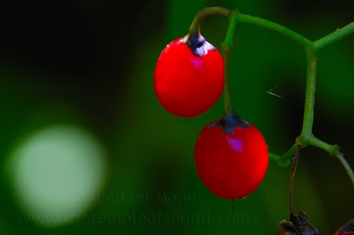 red-berry-glow-web
