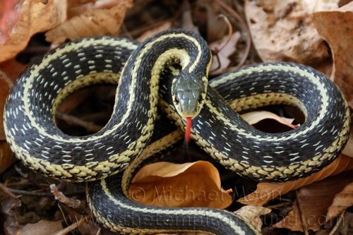 snake246web