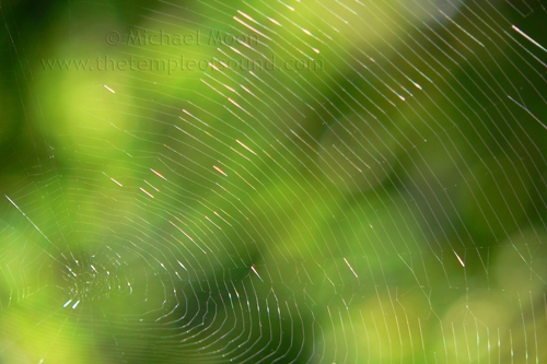 spiderweb-green-web